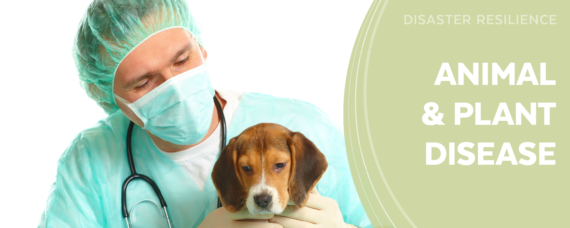 Animal and Plant Disease
